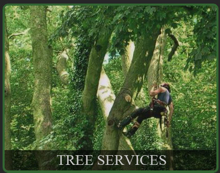 Tree Services in linclnshire